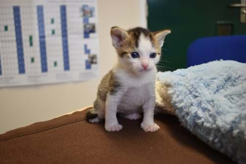 Peter the kitten at charity Wood Green